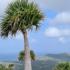 Bonaire Sabal Palm Park lo protehá 'Palma di Kabana'
