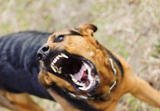 Porfin: A tuma medida kontra kachónan agresivo