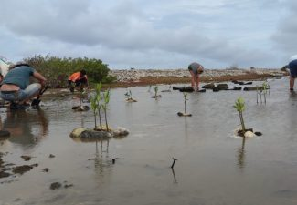Mangrove Maniacs ta planta 200 pal'i mangel