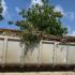 A kolektá mas ku 15.000 kilo di shushi durante akshon di limpiesa